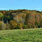 Cow Pasture Landscape Photo in Prince Edward Island by Nadine Staaf