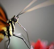 Feeding Butterfly by shuttersuze75