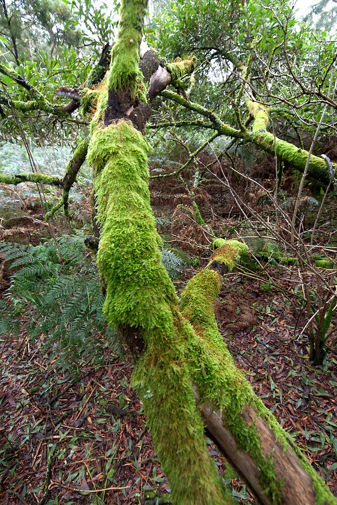 Moss Covered Branches by John Sharp