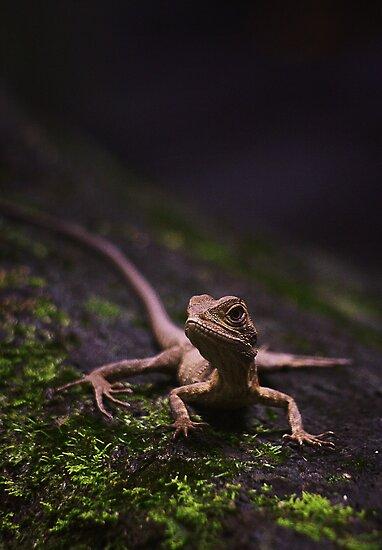 Eastern Water Dragon - Strickland Falls, NSW by Tam  Locke