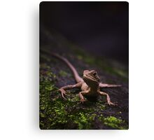 Eastern Water Dragon - Strickland Falls, NSW Canvas Print
