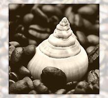 coffee snail by Falko Follert