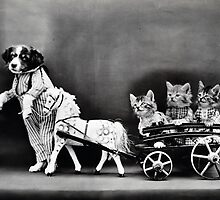 Vintage Puppies and Kittens  by Carol & Colin Bedson