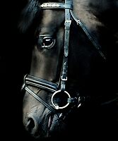 The black stallion by Alan Mattison