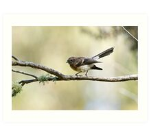 Grey Fantail at the pond Art Print