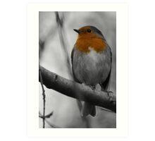 Robin - Selective Colour Art Print