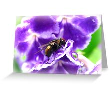 Geisha Fly Greeting Card
