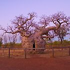 Boab Tree, Kimberley, WA by 4thdayimages