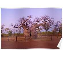 Boab Tree, Kimberley, WA Poster