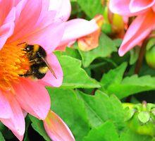 pollen collector by wanderingtrucki