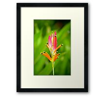 Heliconia Psittacorum Framed Print