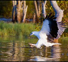 Sea Eagle 179 by John Van-Den-Broeke