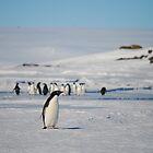 Petersen Island Antarctica by cactus82