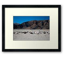 pashmina sheep Framed Print