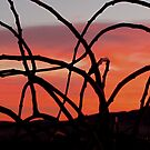 Enchanted Dawn by © Loree McComb