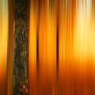 Forest Warmth by John  De Bord Photography