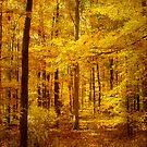 Golden Day by vigor