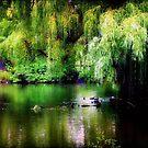 Paradise Island © by Dawn M. Becker