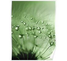 Green drops of dew Poster