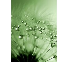 Green drops of dew Photographic Print