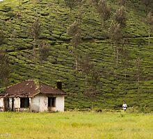 house and the tea estate by vishwadeep  anshu