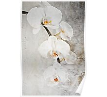 Wall Orchid Poster