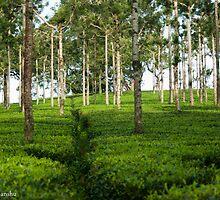 the tea estate by vishwadeep  anshu