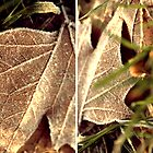 frostcoveredautumnleaves by Gabrielle Agius