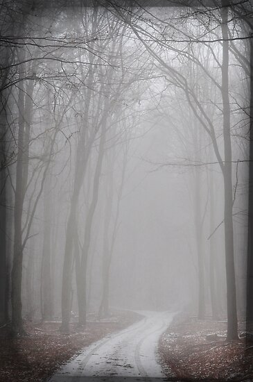 misty forest I by Iris Lehnhardt