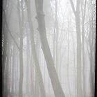 misty forest III by Iris Lehnhardt
