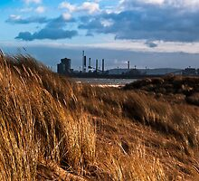 Dune grasses and chemical plant by David Hall