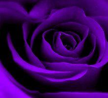 A Purple Rose. by Aj Finan