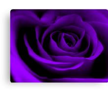 A Purple Rose. Canvas Print