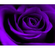 A Purple Rose. Photographic Print
