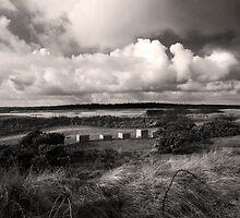 Minsmere RSPB reserve Dunwich, Suffolk by Darren Burroughs