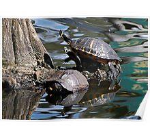 Slider Turtle Reflections Poster