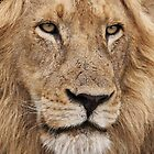 African Lion #4 by Kobus Olivier