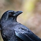The Northwest Crow by Tom Talbott