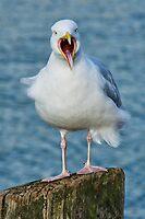 Stop Ruffling My Feathers! by Susie Peek
