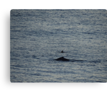 Whale And Dolphin - Ballena Y Delfin Canvas Print