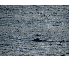 Whale And Dolphin - Ballena Y Delfin Photographic Print