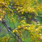 Dreamy Photo . 7 ★★★★★ .  ####  Painting by earlyeau ! autumn  ####.  Norway. 2011. « Arrête-toi, tu es si b»  . Views: 749 . Featured Avant - Garde Art. by © Andrzej Goszcz,M.D. Ph.D