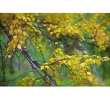 Dreamy Photo . 7 ★★★★★ .  ####  Painting by earlyeau ! autumn  ####.  Norway. 2011. « Arrête-toi, tu es si b»  . Views: 749 . Featured Avant - Garde Art. Photographic Print