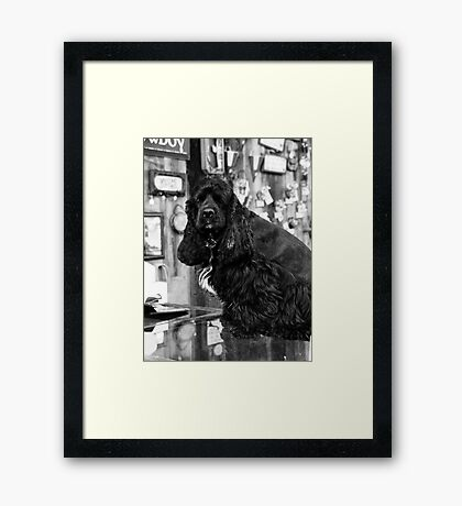 Small Town Pets 1 Framed Print