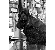 Small Town Pets 1 Photographic Print