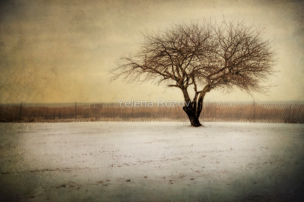 Lonely Tree by Yelena Rozov