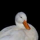 Pekin duck by Tim Mizon