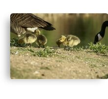 Young Canvas Print