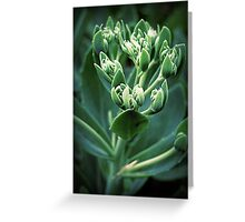 Calming Effects Greeting Card
