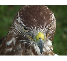 Evil look Eagle Photographic Print